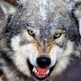 DJ时尚Wolf族